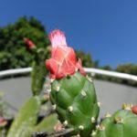 Medellin, jardin botanique